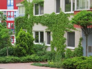 Zelené fasády sa čoraz častejšie stávajú realitou aj v našom meste