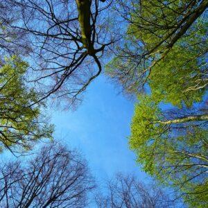 tree-3353617_960_720